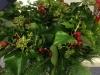 advent_wreath_02_w800