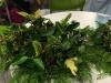 advent_wreath_04_w800